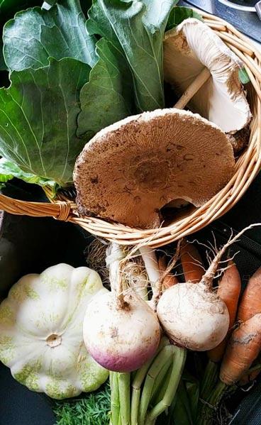 pic_atelier-legumes_H600
